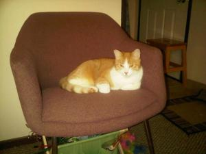 Mango in the chair