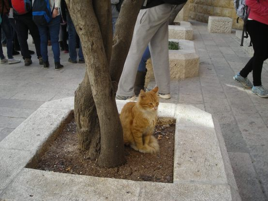 Kitty chillin' in Jerusalem