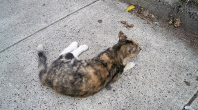 New Haven, Wooster Street: Another RFC (random friendly cat)