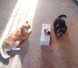 Family cat staredown