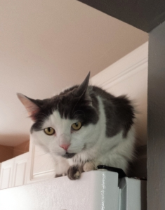 Cat on fridge, Airbnb listing
