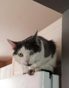 Cat on fridge, Airbnb listing